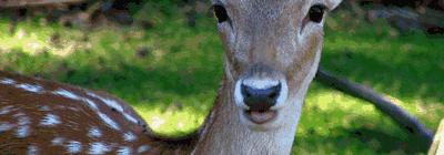 Esse negócio de são paulino ser bambi é mito!